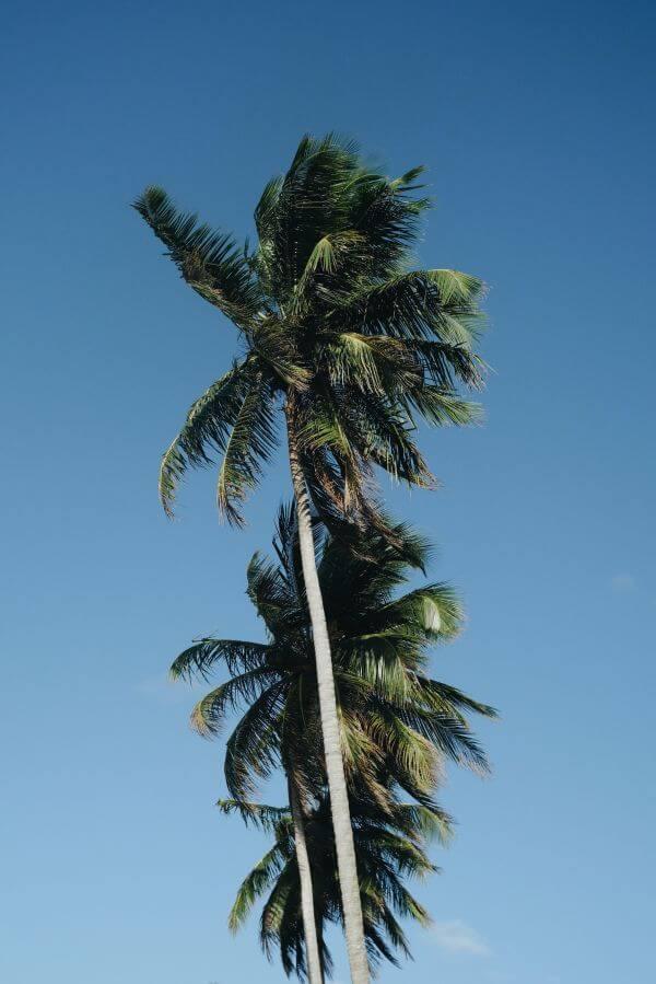 Free Palm