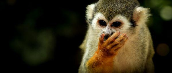 Free Eating monkey