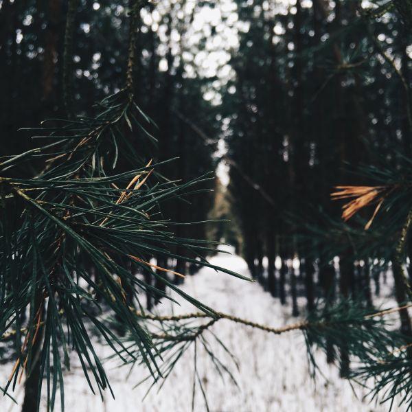 Free instagram.com/sylwiamiszczuk