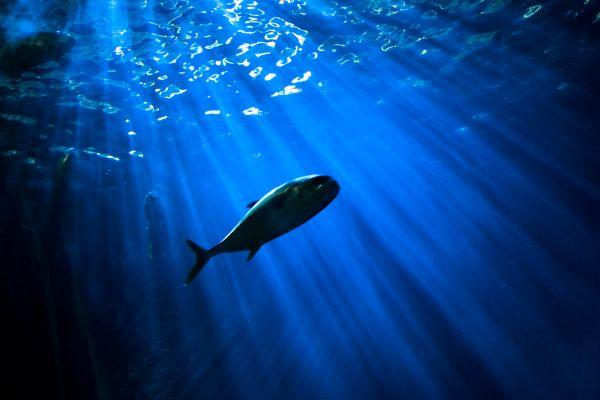 Free The Deep