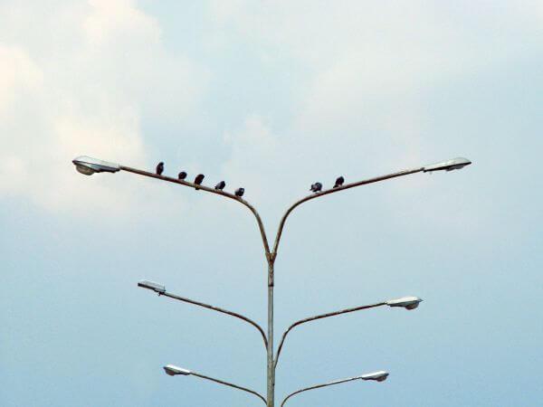Free Unbalanced