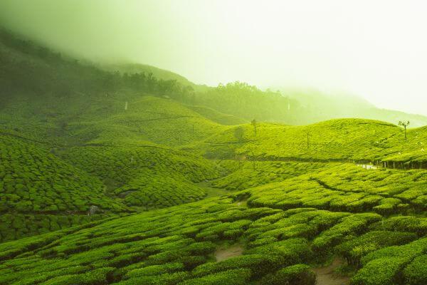 Free Munnar, Kerala