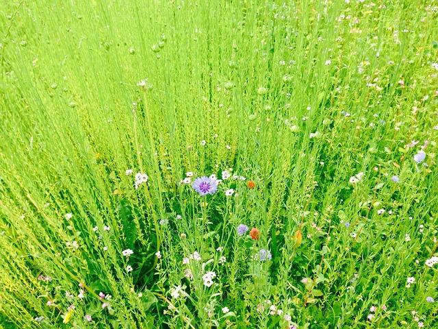 Free field meadow green landscape nature