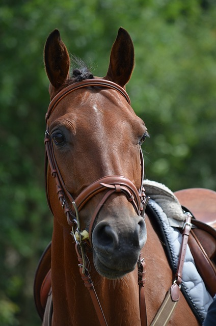 Free tournament horse racehorse horse saddle horse