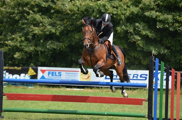 Free tournament ride horse show jumping equestrian