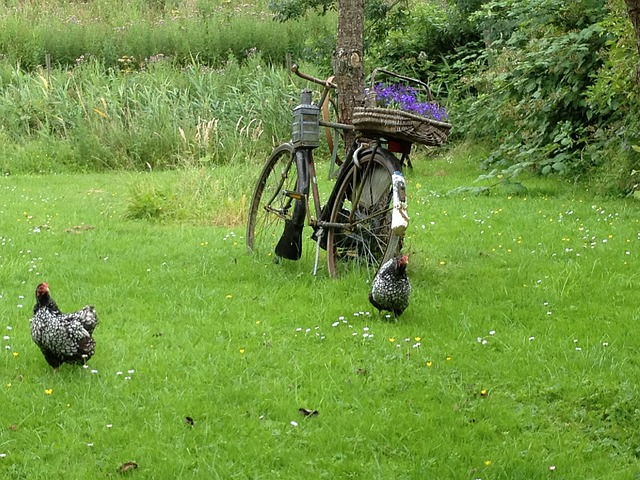 Free bicycle garden chicken outdoor decoration