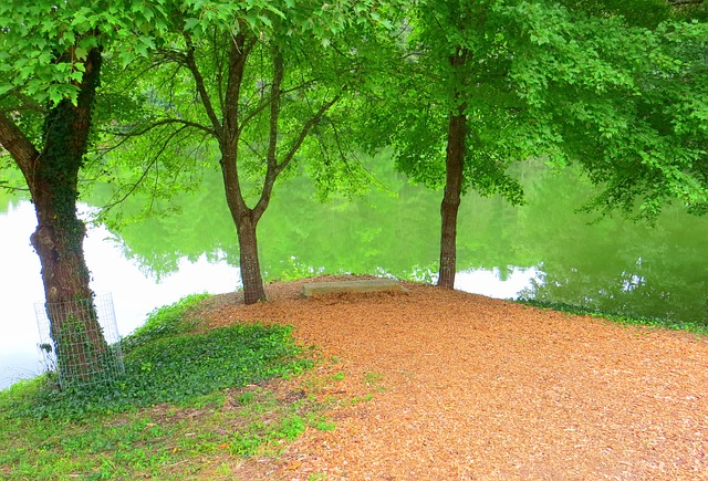 Free lake trees peaceful bench green nature water