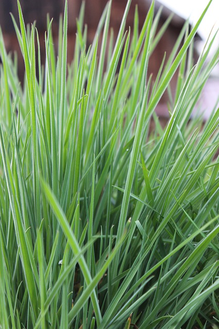 Free blades of grass meadow pasture nature rush grass