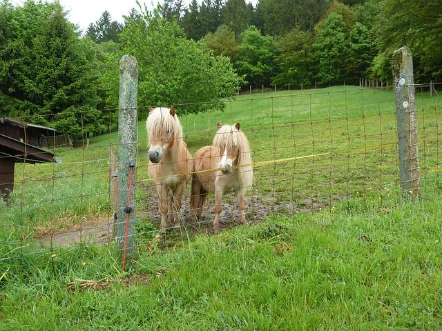Free pony shettie minishettie horse pets