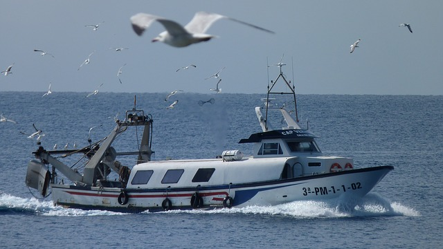 Free fishing boat gulls sea birds fish start