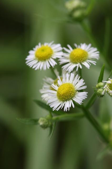 Free Photos: Flowers green | lee jeonghyev