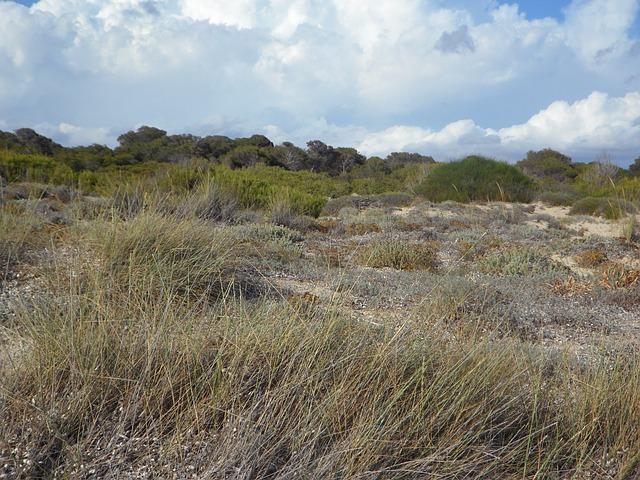 Free Photos: Dunes dune landscape empty fouling sandy rest | M W