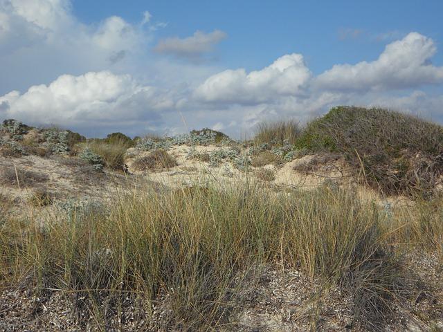 Free dunes dune landscape empty fouling sandy rest