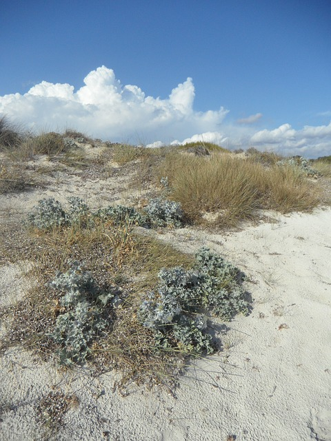 Free dune dune landscape empty fouling sandy rest