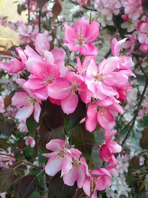 Free flowers pink nature floral blossom bloom