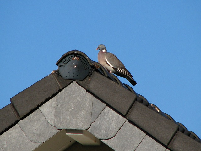 Free dove roof gable bird sky blue tile