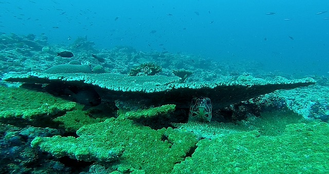 Free turtle underwater world underwater diving close