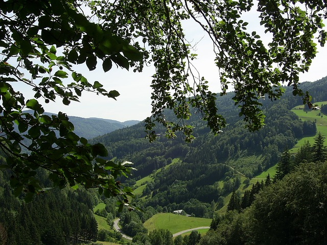 Free black forest mountains forest valley landscape