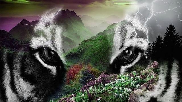 Free animal world wildcat predators tiger predator eyes