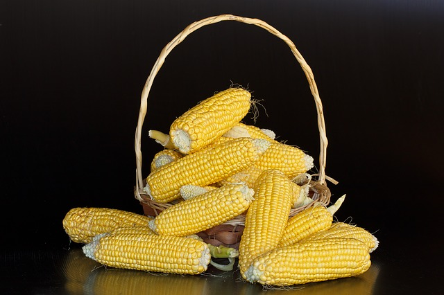 Free maize mealies corn sweetcorn yellow
