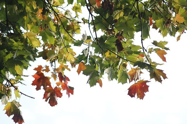 Free leaves nature light autumn tree season color
