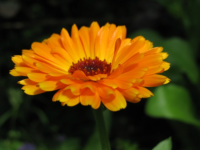 Free flower orange yellow