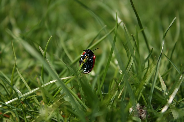 Free beetle insect grass blades of grass