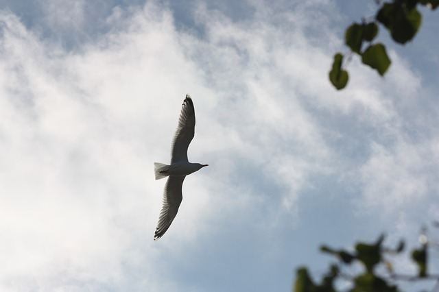 Free seagull sky bird fly nature animal water bird