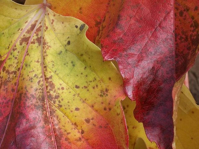 Free golden october leaves autumn colorful fall foliage