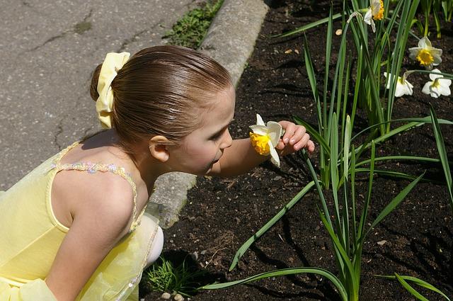 Free girl kid child ballerina daffodil yellow sniffing