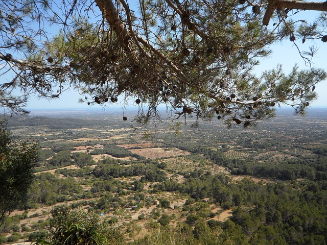 Free mallorca landscape outlook agriculture view vision