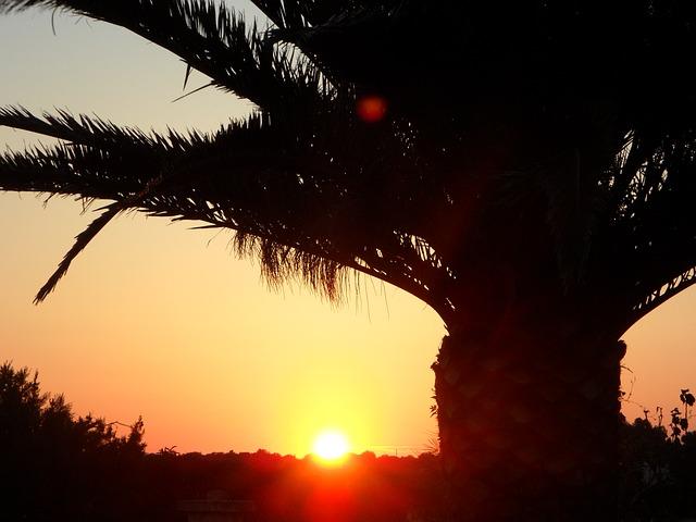 Free palm sun sunset silhouette sky abendstimmung