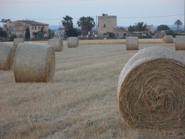 Free straw bales hay bales field abendstimmung mowed