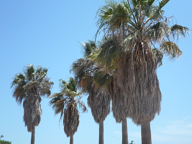 Free palm trees tropical mediterranean holiday blue