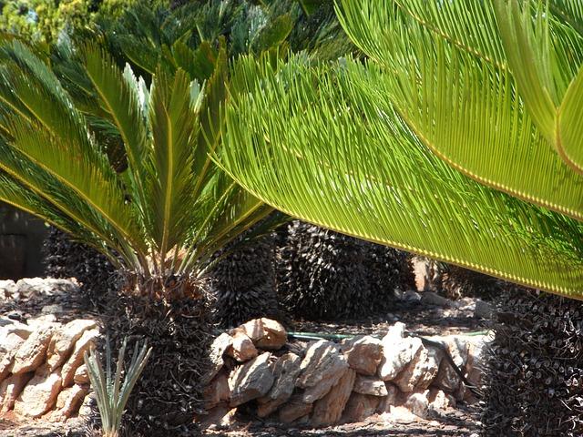 Free cycad fern botanical garden plant planting flora