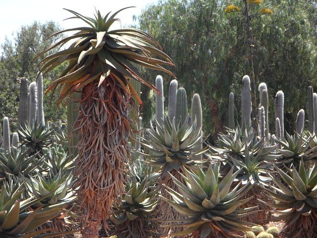 Free aloe cactus plant exotic exotics flora agave