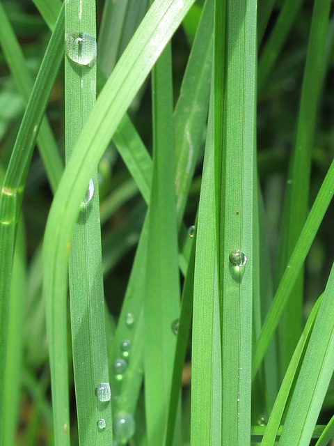 Free drops lawn green grass nature