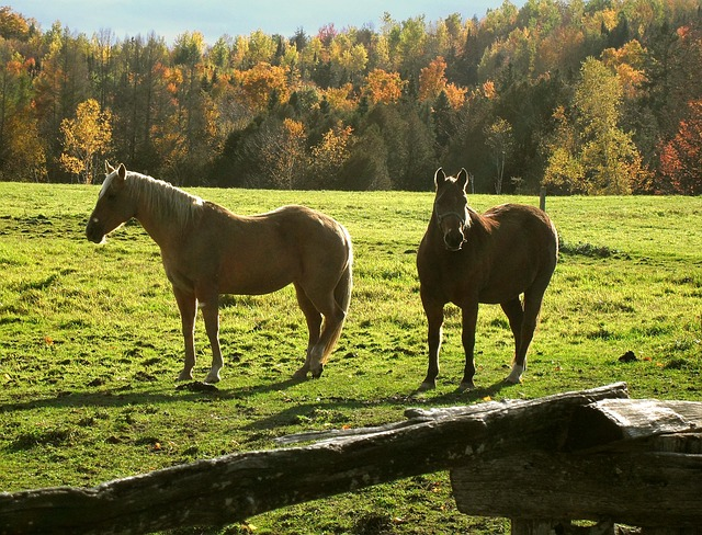Free horses ranch rural fall vermont field equine