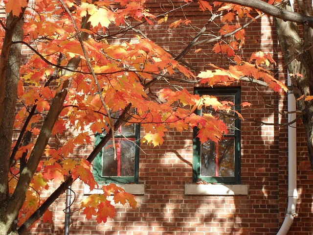 Free fall autumn new england brick red orange leaves