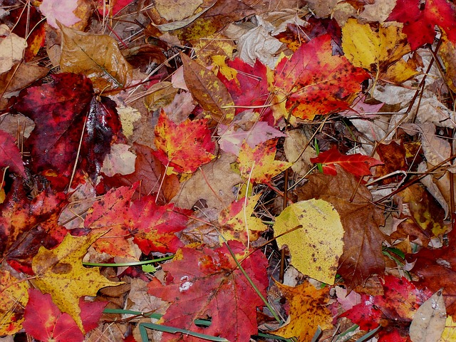 Free fall leaves moist autumn season orange red leaf
