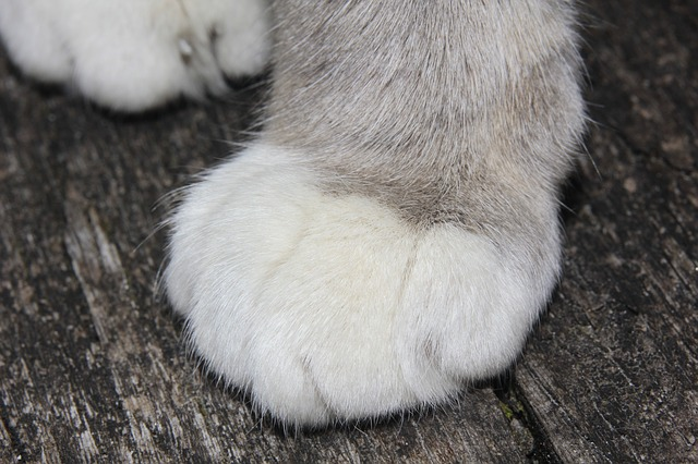 Free cat cat's paw occur detention velvet paw claw