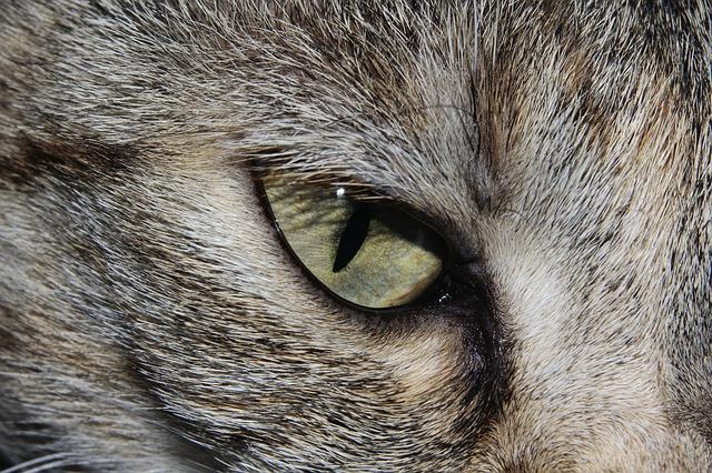 Free               cat cat's eye close cute beautiful animal world