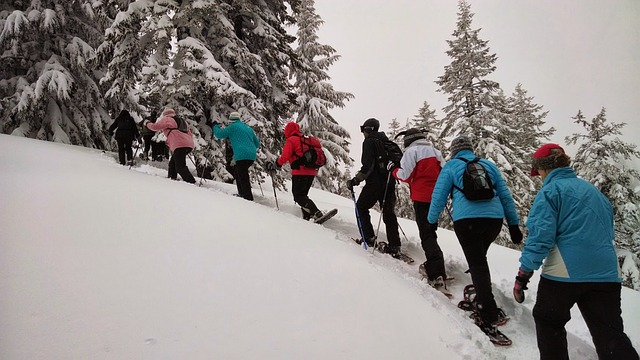 Free hiking snowshoeing tour snow trees forest winter