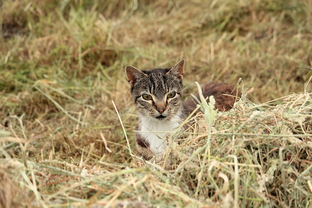 Free cat hunting lauer grass nature cat's eyes