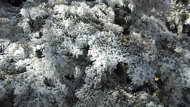 Free winter tree frost snow white snowy outdoors