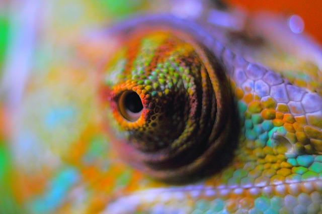 Free chameleon abstract chameleon reptile yemen chameleon
