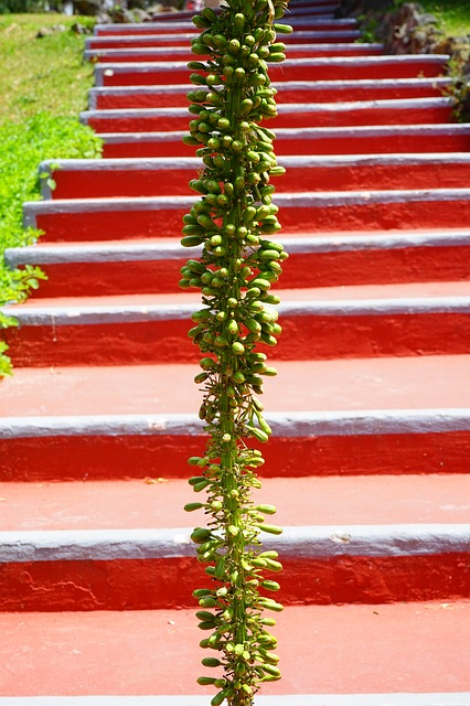 Free agave inflorescence plant stairs red green