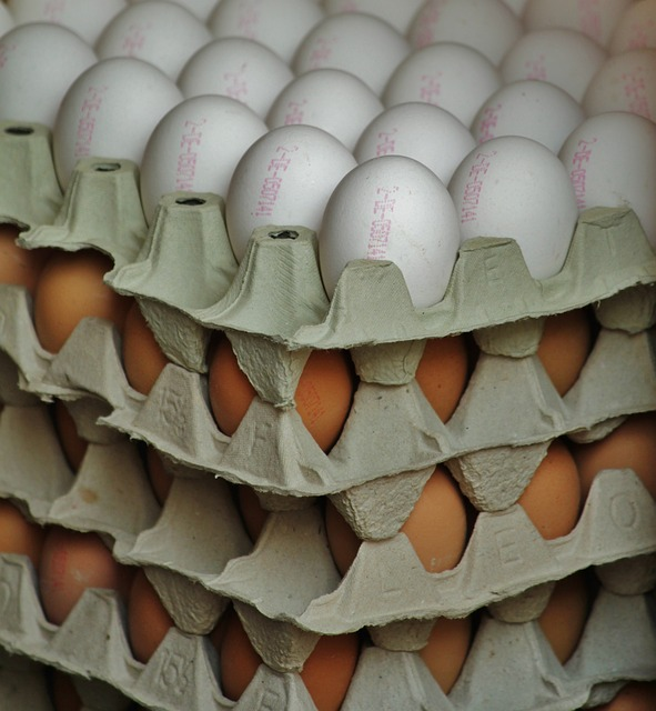 Free egg egg carton egg shells hen's egg chicken eggs
