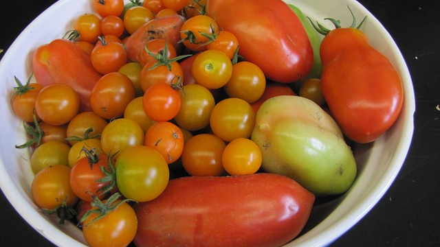 Free tomatoes summer harvest fresh organic vegetarian