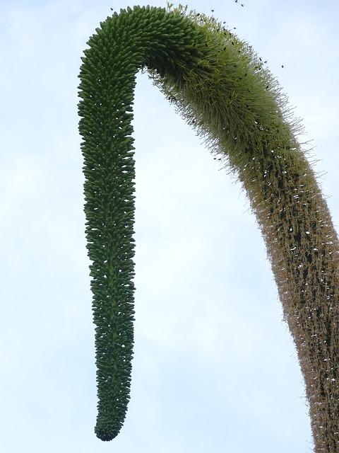 Free tassel plant nature curve